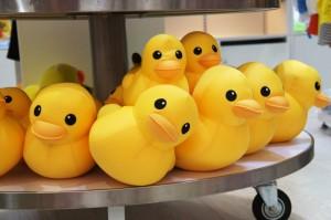 little yellow ducks